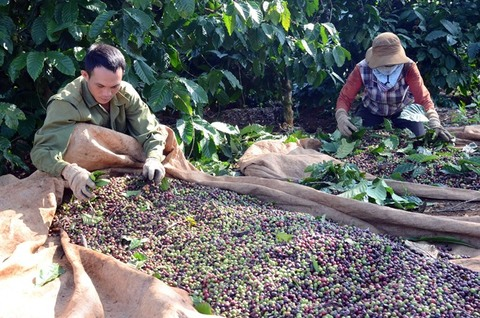 Technology can raise quality of agricultural products