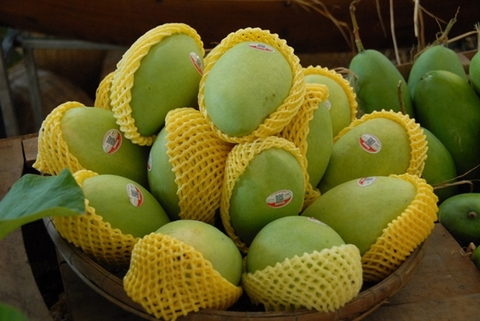 First Vietnamese mango exported to the US