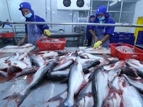 Shark catfish exports to US, China fall